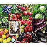 Fruit Veggie Combo Pack Raspberry, Blackberry, Blueberry, Strawberry, Apple, Tomato, Eggplant, Grape, Cabbge (Organic) 940+ Seeds 650327336971 + 9 Free Plant Markers