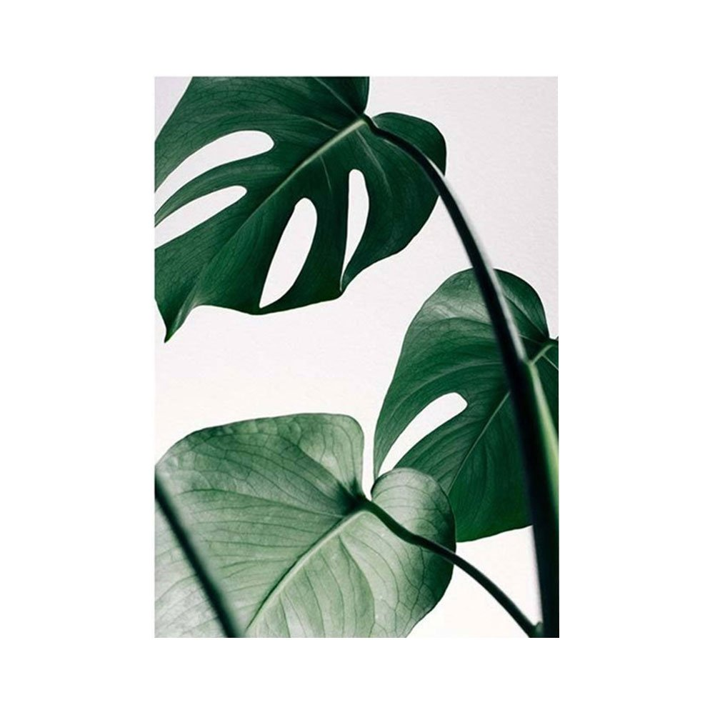 Kalaokei Frameless Nordic Monstera Wall Art Painting Poster Pictures Home Bedroom Decor - 21x30cm 1