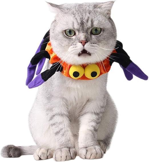 Ropa de decoración para mascotas Gato Mascota Araña Collares Ajustable for Pascua Halloween Ropa divertida Disfraces for el festival Ropa for mascotas La mayoría de los gatos y perros pequeños Disfraz: Amazon.es: