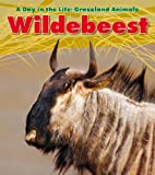 Wildebeest, Louise Spilsbury, 1432947451