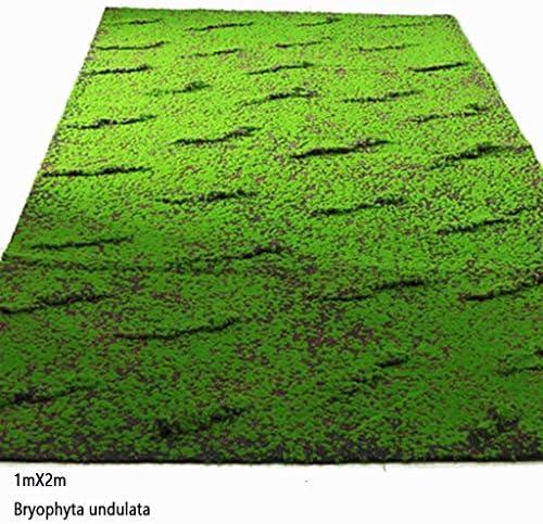 人工芝苔、家庭用ガーデンバルコニー屋外室内装飾風景パティオサイズ1m×2m (Size : 5piece)