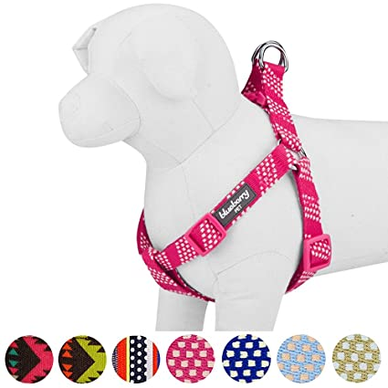 61xLOAoO%2BjL._SX425_ amazon com blueberry pet 4 colors step in artisan crochet inspired