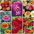 Majestic Mixed Zinnia Seeds (7 Types) 100 Seeds