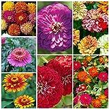 Majestic Mixed Zinnia Seeds (7 Types) 100 Seeds