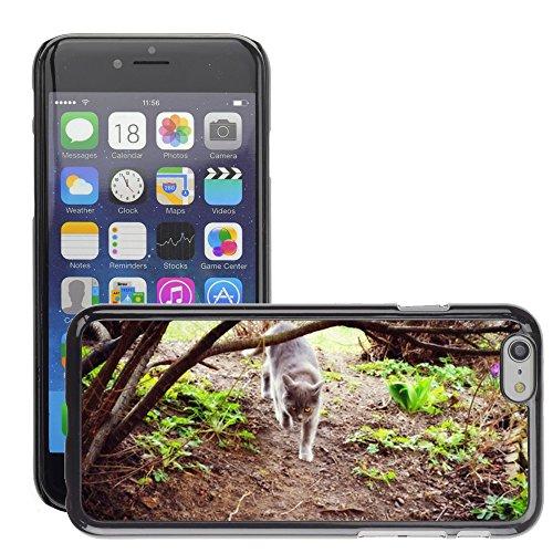 """Just Phone Cases Hard plastica indietro Case Custodie Cover pelle protettiva Per // M00127933 Animaux Cat Homemade Chat // Apple iPhone 6 PLUS 5.5"""""""