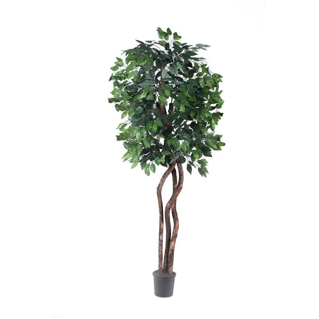 Vickerman THE0165-07 Green Ficus Everyday Tree