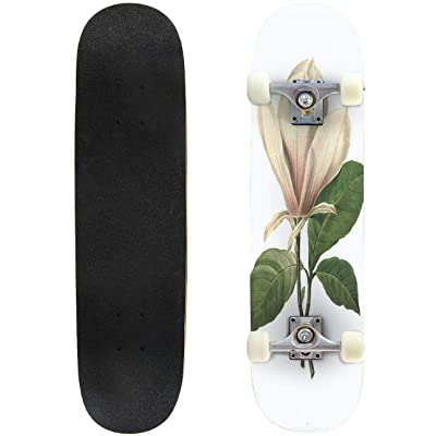 31 inch Skateboard chinese magnolia | redoute flower illustrations victorian botanical Complete Longboard Standard Skate board Double Kick Tricks Skateboards for Kids Boys Girls Youths Beginners : Sports & Outdoors