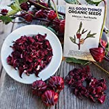 Hibiscus sabdariffa / Roselle Seeds (~25) by All Good Things Organic Seeds: Certified Organic, Non-GMO, Heirloom, Open Pollinated Seeds from the United States