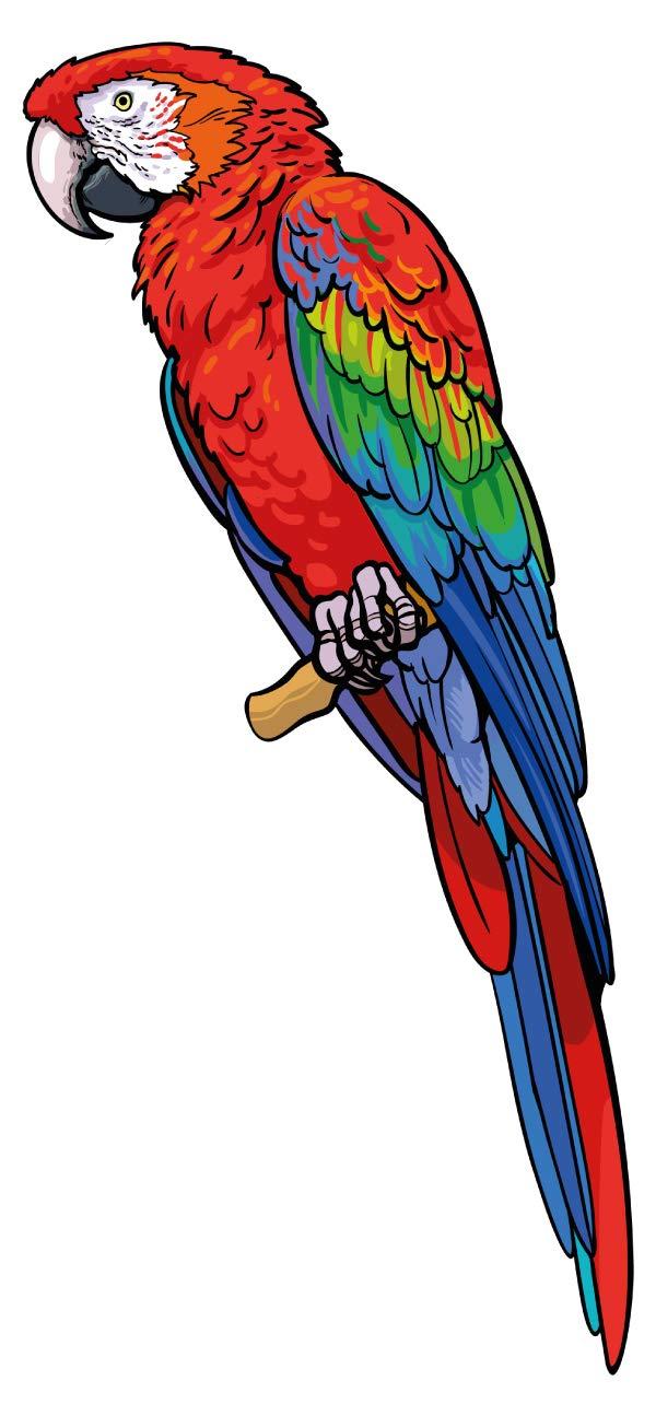 Wandtattoo Kinderzimmer Wandsticker Bunter Papagei cooles Tiermotiv zum Kleben