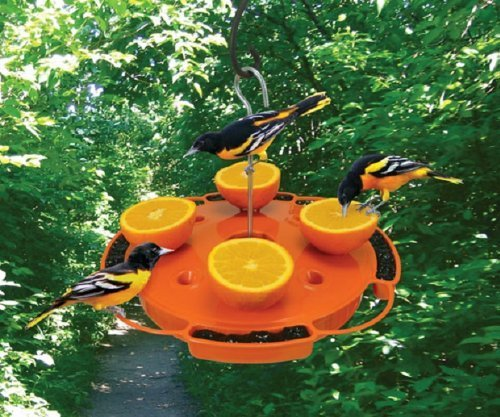 Songbird Essentials SE905 Ultimate Oriole Feeder (Set of 1)