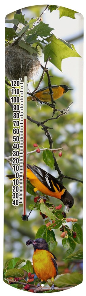 Heritage America by MORCO 375BO2 Oriole in Tree Outdoor or Indoor Thermometer, 20-Inch