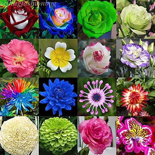 Go Garden Fluorescent Flower(100Pcs) : Multi-Style Flowers Seeds Rose Plum Carnation Lavender Tulips Seed Potted Plant ()