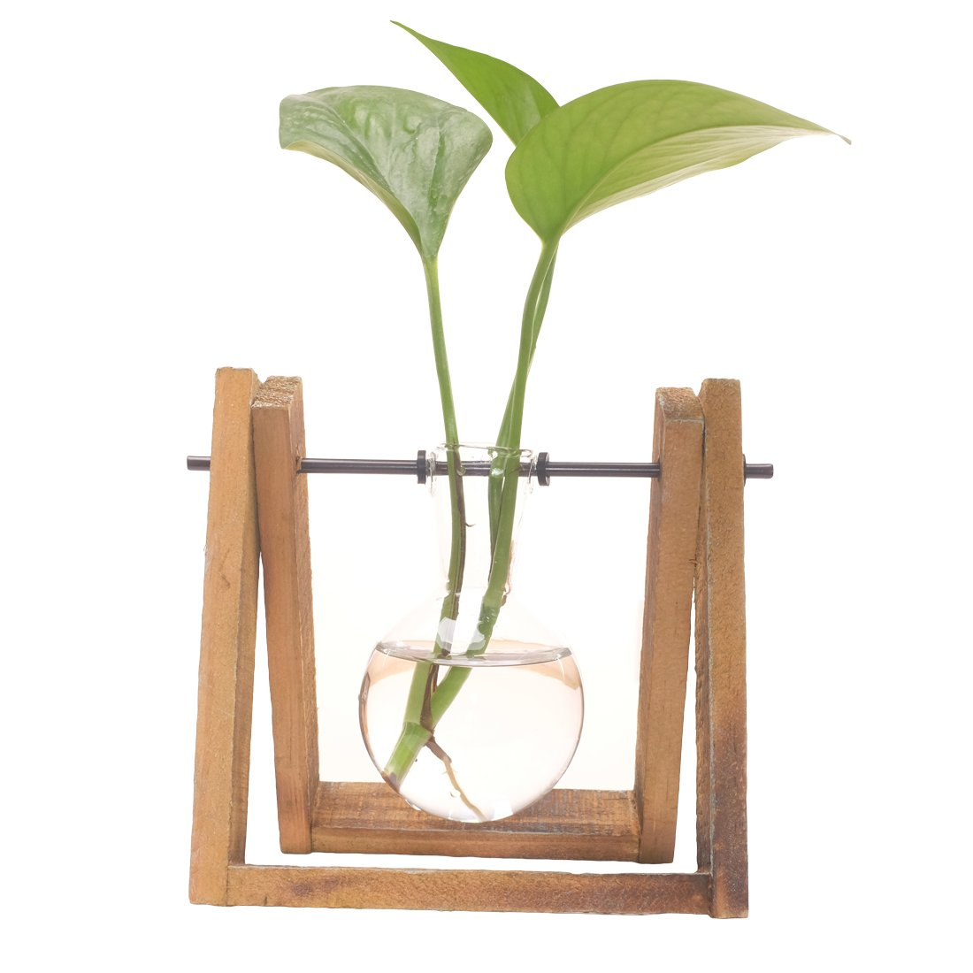 Plant Terrarium with Wooden Stand Glass Vase Holder for Home Decoration,Scindapsus Container (1 Terrariums)