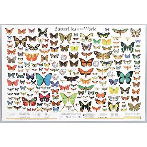 [해외]Butterflies of the World Chart / Butterflies of the World Chart