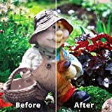 Rejuvenate Outdoor Color Restorer Instantly