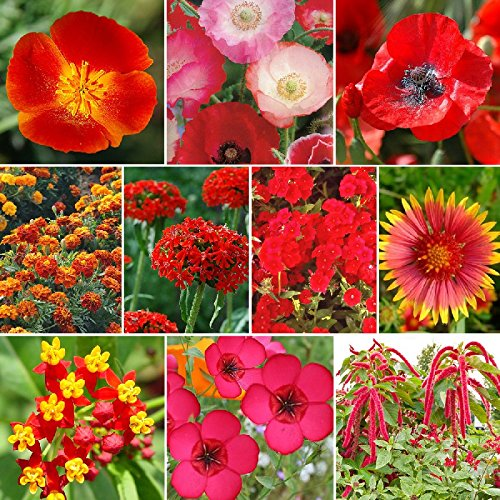 Red Head - Exclusive Red Wildflower Seed Mix - 10 Pounds, Red by Eden Brothers (Image #1)
