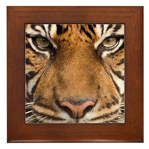 (Framed Tile Sumatran Tiger Face)