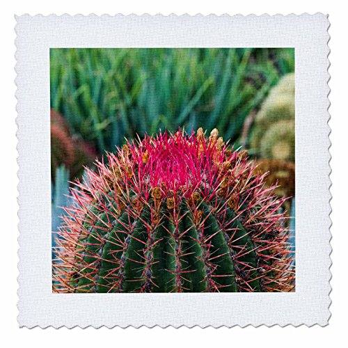 3dRose Danita Delimont - Cactus - Spain, Canary Islands, La Gomera, Barrell cactus detail - 18x18 inch quilt square (qs_257880_7) by 3dRose
