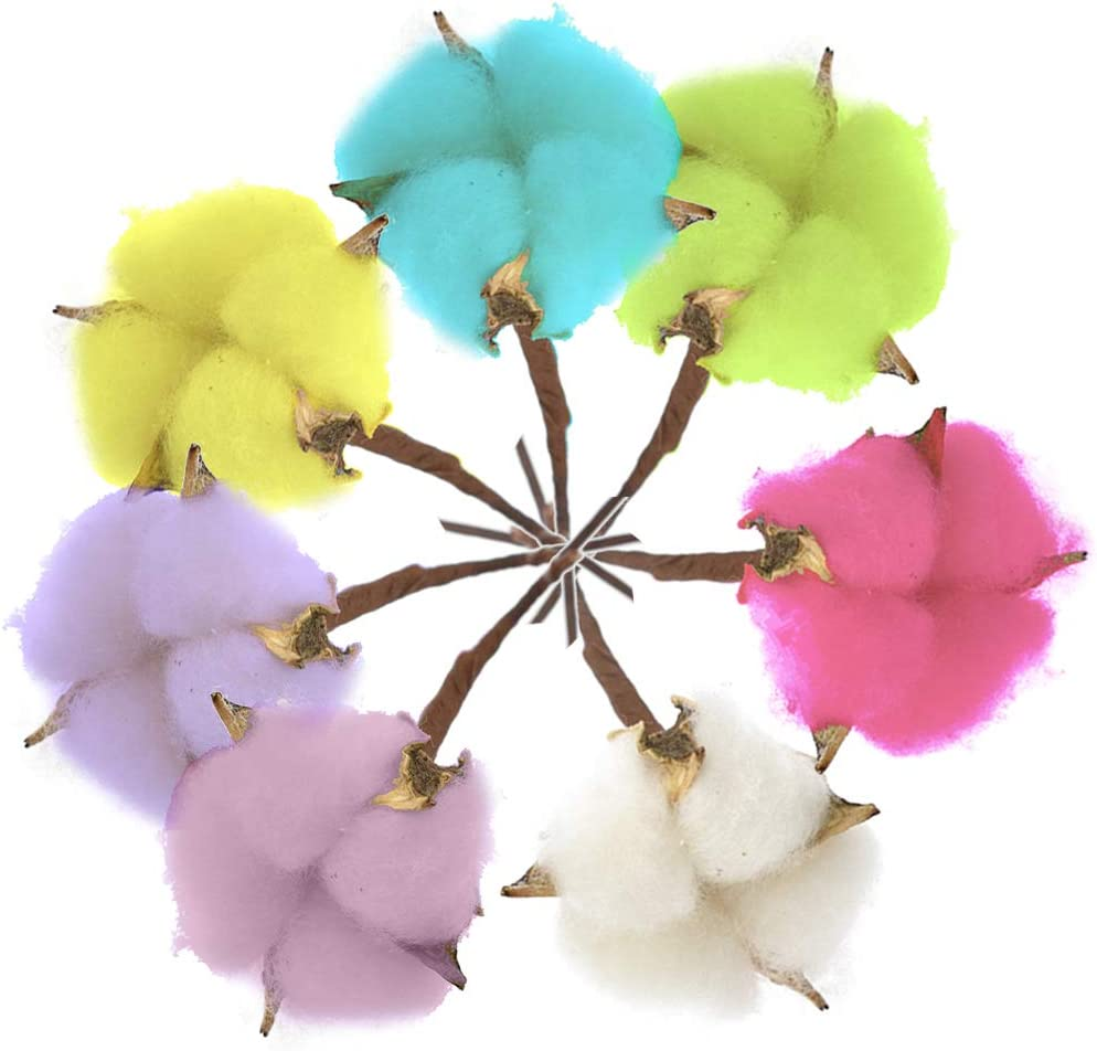 Flores de algodón de colores naturales secas, de algodón, tallos ...