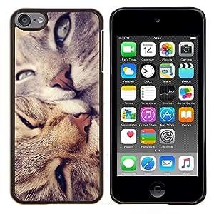 TECHCASE---Cubierta de la caja de protección para la piel dura ** Apple iPod Touch 6 6th Touch6 ** --Americano de Pelo Corto Rizo Love Cats beso