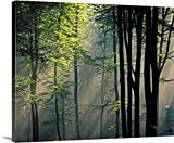 greatBIGcanvas Gallery-Wrapped Canvas entitled Sunlight and fog in forest by Great BIG Canvas 48''x38''