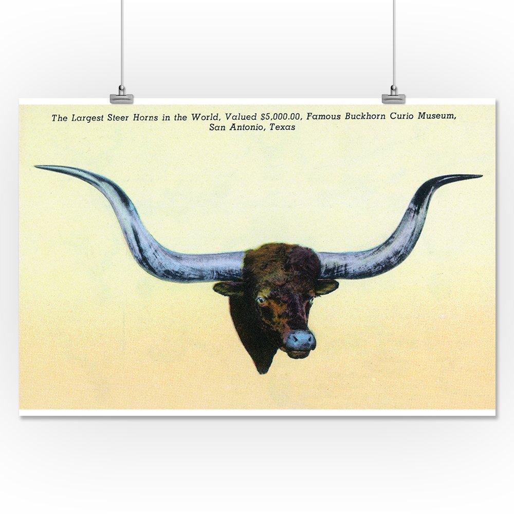 Amazon.com: San Antonio, Texas - Buckhorn Curio Museum; Largest ...