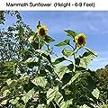 Fiber Soil Seed Starter