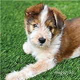 Mega Grass 4'W x 6'L Artificial Grass for Pet Dog Potty Outdoor or Indoor Green Faux Fake Grass Decor | 24 SqFt 1.13'' Tall Blades 50oz Face | Realistic Artificial Grass Mat Rug Pad Carpet Turf
