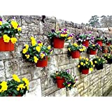 "Pack of 12 plant pot holder rings to hang 6"" plant pots on walls, fences & pallets pack includes wall plugs & screws"