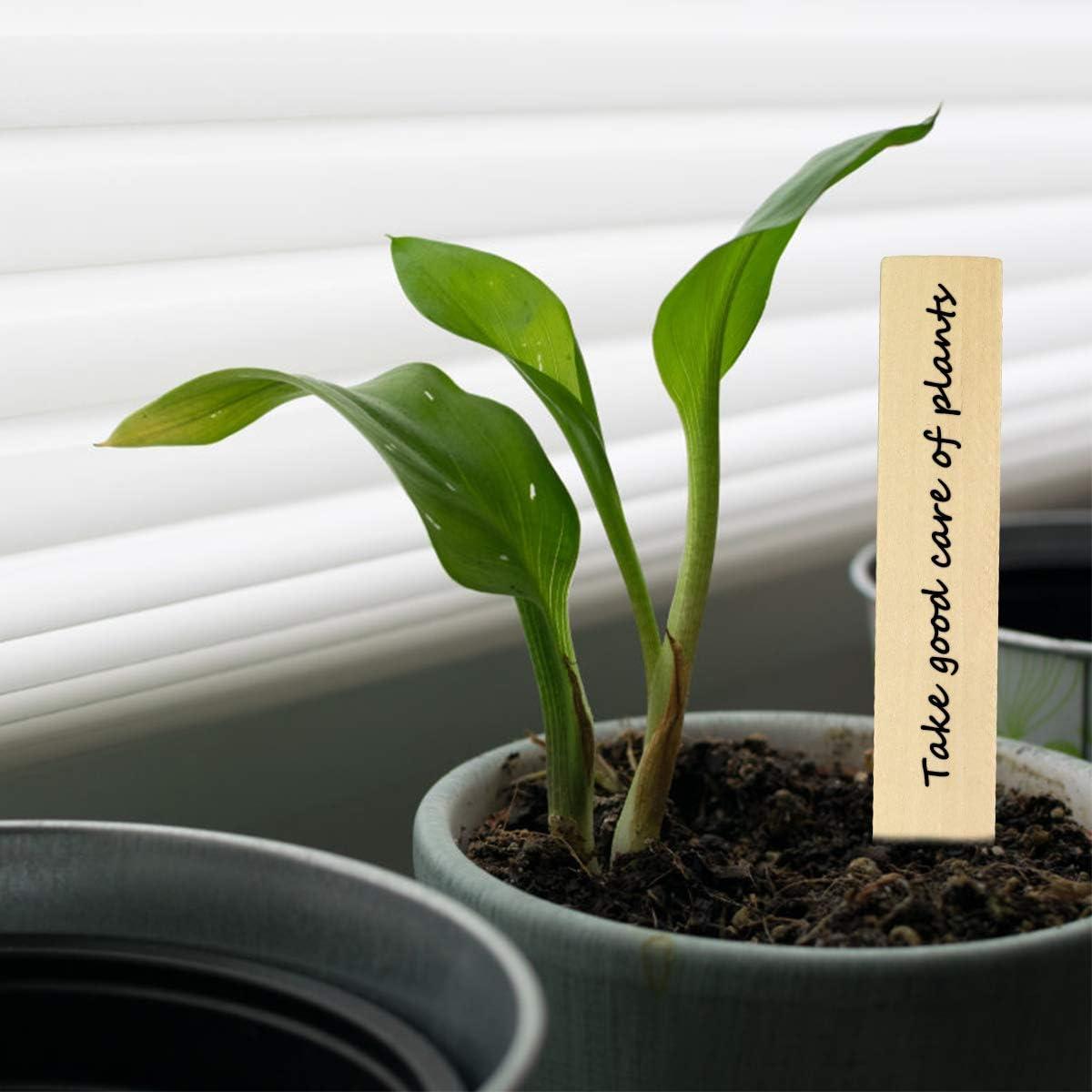50pcs Etiquetas de Plantas de Madera Grandes Etiquetas de Jard/ín para Plantas Impermeables Marcadores Plantas para Semillas Hierbas en Macetas Flores Verduras 6 x 0.8 Pulgadas