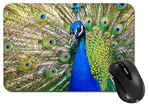 MSD Large Mouse Pad XL Extended Non-Slip Rubber Extra Large Desk Mat IMAGE 22635999 Colorful Blue Ribbon Peacock in full feather color saturated]()