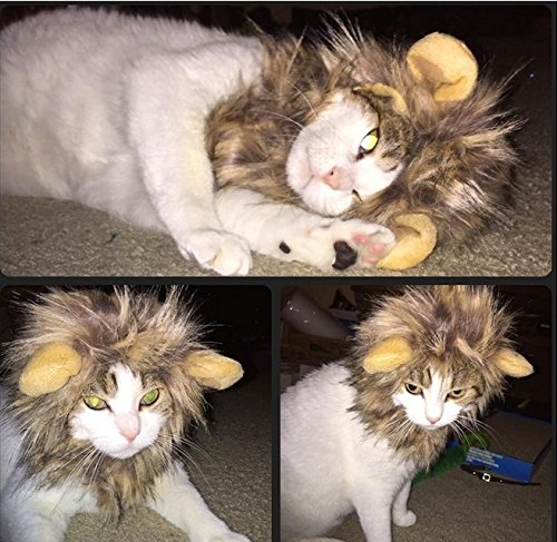 Looching 1Pcs Brown Cat Dog Lion Mane Wig Costumes Pet Festival Halloween Party Fancy Hair Clothes Dress up with (Dress Up Dogs)