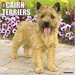 Just Cairn Terriers 2018 Wall Calendar (Dog Breed Calendar) on sale