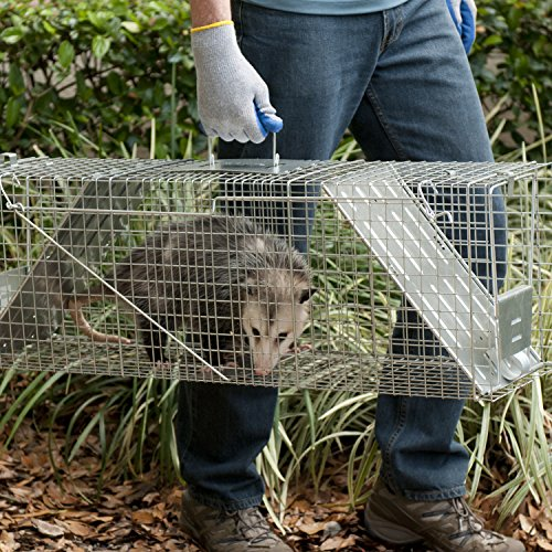Havahart 1045 Live Animal Two Door Raccoon Stray Cat