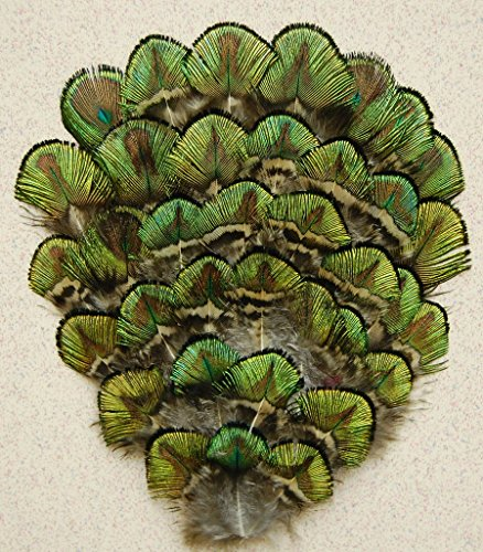 Pad Gold Peacock Feather - 3 Pcs Peacock Feather Pads - Peacock Green/Gold