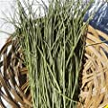 Everwilde Farms - Chives Herb Seeds - Gold Vault