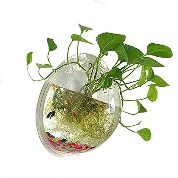 Favsonhome - Cuenco para Peces, acrílico Transparente de 1 galón, para Colgar en la Pared, Acuario, pecera, Burbuja: Amazon.es: Productos para mascotas