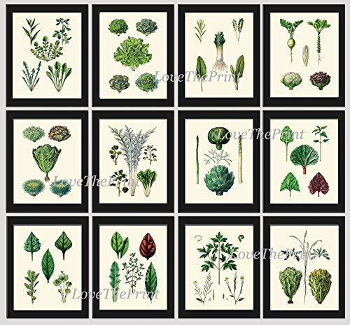 Vegetable Print Set of 12 Prints Antique Botanical Herbs Spices Lettuce Salad Mix Rosemary Thyme Artichoke Cauliflower Green Garden Plants Kitchen Dining Room Home Decor Wall Art Unframed HJP