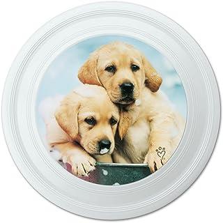 Graphique et Plus Labrador Retriever Chiots Chiens de Bain Bulles Seau Fantaisie 22,9cm Flying Disc 9cm Flying Disc Graphics and More