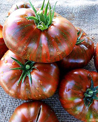 Indeterminate Tomato - 50+ ORGANICALLY GROWN Chocolate Stripes Tomato Seeds, Heirloom NON-GMO, Indeterminate, Open-Pollinated, Rich Flavor, Dark and Beautiful, Delicious, From USA