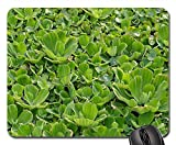 Mouse Pad - Aquatic Plant Floating Plant Tropical Shell Flower