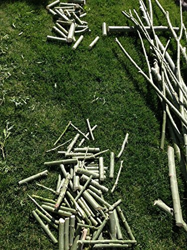 Review 50 Hybrid Willow Trees.