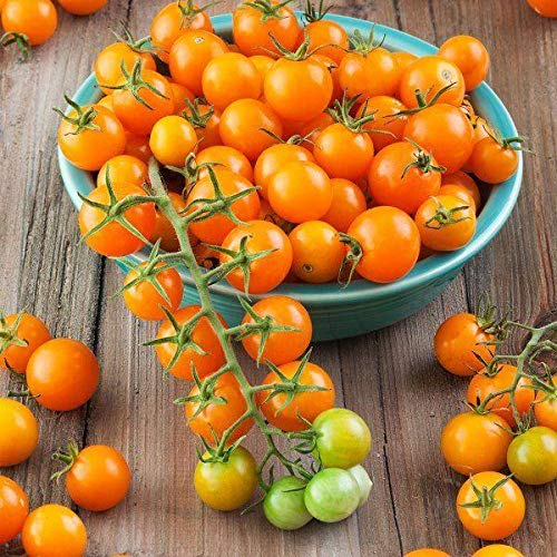 Sun Gold Hybrid Tomato Seeds (40 Seed Pack) (Seeds Sungold Tomato)