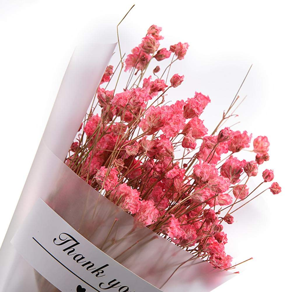 WXGY Mini nat/ürliche Baby Atem trocken Blumenstrau/ß Hochzeit Dekoration DIY Handwerk Himmel Sterne Blume Foto Requisiten