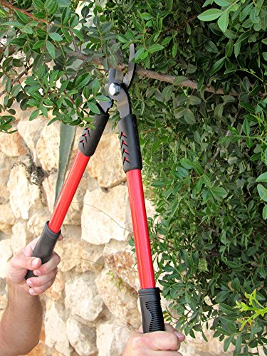 TABOR TOOLS GL18 20-Inch Bypass Mini Lopper, Makes Clean Professional Cuts, 1-Inch Cutting Capacity, Tree Trimmer and Branch Cutter Featuring Sturdy Medium-Sized 15-Inch Handles. by TABOR TOOLS (Image #4)