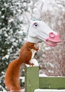 Amazoncom Accoutrements Horse Head Squirrel Feeder Toys Games