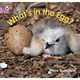 What's in the Egg?: Band 00/Lilac (Collins Big Cat)