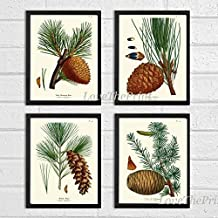 Botanical Print Set of 4 Antique Beautiful Redoute Pinecones Pine Tree Green Forest Nature Home Room Decor Wall Art Unframed