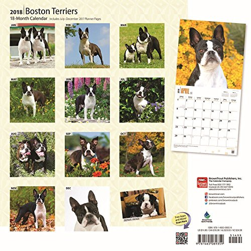 Boston Terriers 2018 Wall Calendar Photo #3