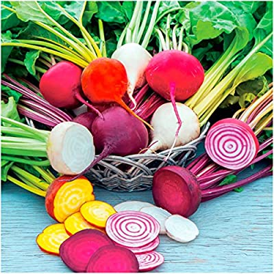 Package of 600 Seeds, Rainbow Mixed Beets (Beta vulgaris) Non-GMO Seeds By Seed Needs
